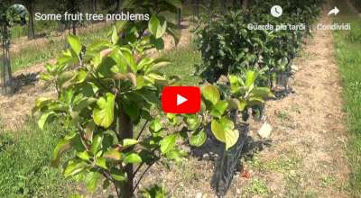 fruit tree problems august