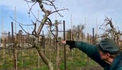 dan neuteboom principles of pruning video