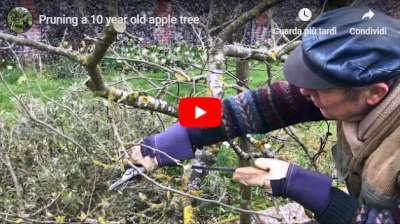 Dan Neuteboom pruning a 10 year old apple tree