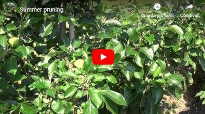summer pruning video