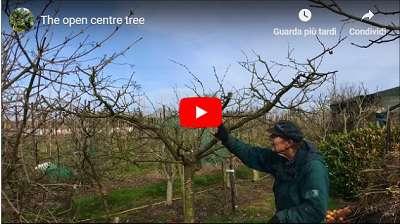video dan neuteboom the open centre tree