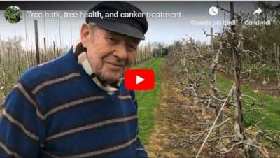 tree health tree bark canker