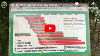 fruit tree variety choice