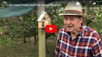 insect hotel pollination video