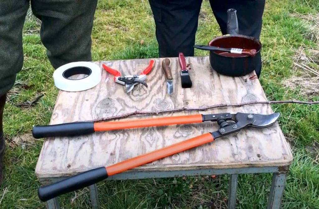 grafting tools and materials