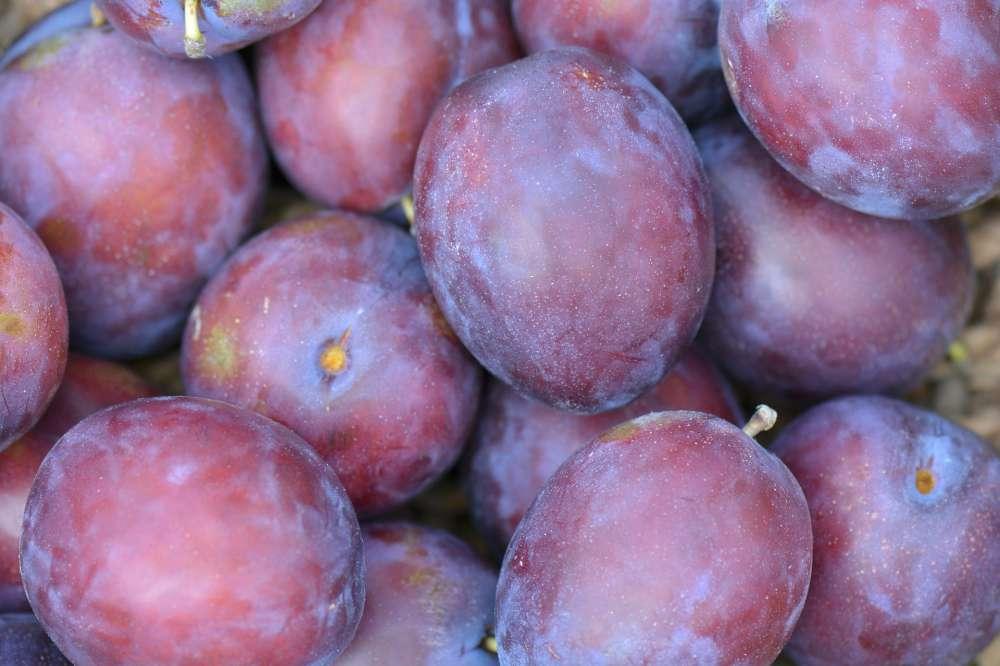 Czar plums