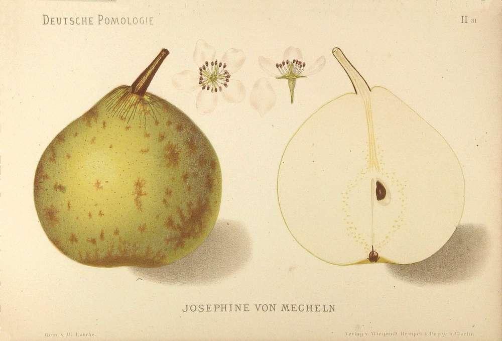 Josephine de Malines