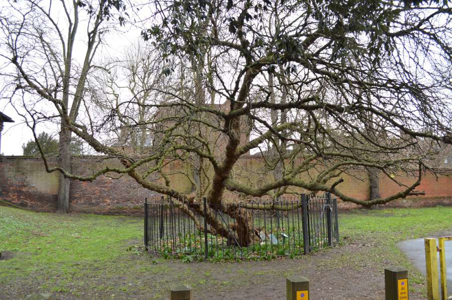 Charlton mulberry London