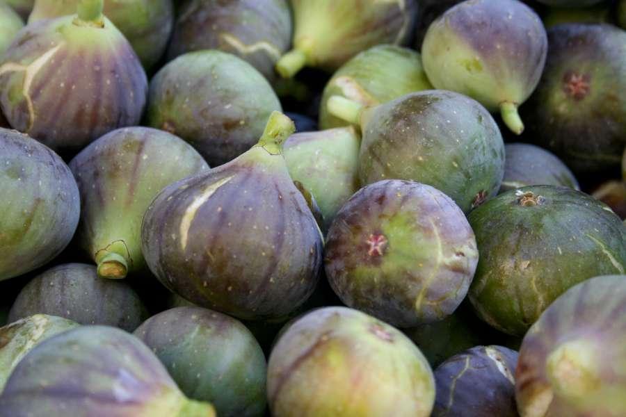 brunswick figs