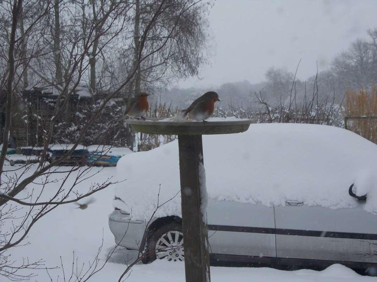 bird table in winter