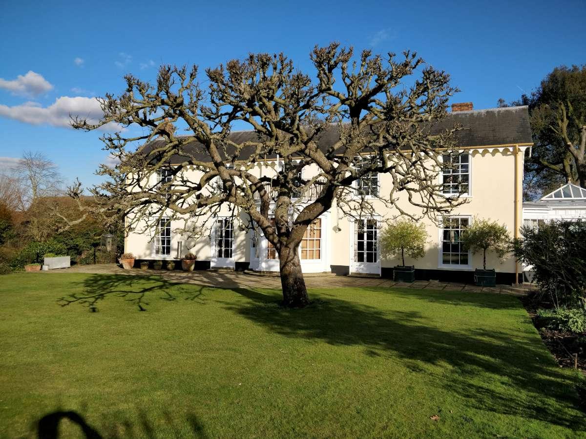 century old bramley tree